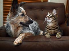 В Удмуртии хотят регламентировать содержание домашних животных в квартирах