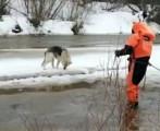 Спасатели глазовского поисково-спасательного отряда спасли собаку со льдины