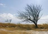 В Удмуртии с 31 марта ожидается ветреная погода