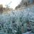 Жителей Удмуртии предупредили о заморозках